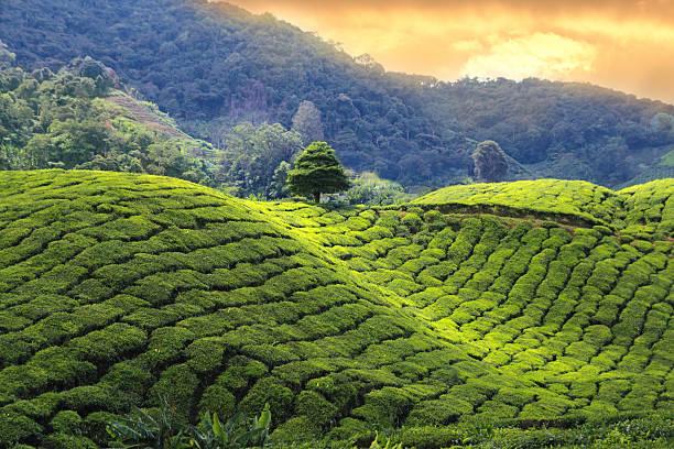Beleef dit jaar een onvergetelijke Sri Lanka en Malediven prive rondreis